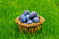 Free Plums Stock Image - 16192211