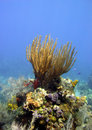 Free Colourful Coral Reef Scene Stock Photos - 16193823