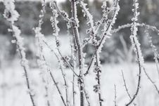 Free Winter Landscape In Snow Stock Photo - 16190500