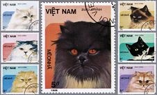 Free Collage Cats On Stamps Royalty Free Stock Photography - 16190597