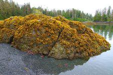 Intertidal Zones Exposed Royalty Free Stock Photo