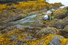 Free Intertidal Zones Exposed Stock Photography - 16193202