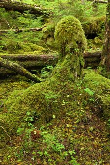 Free Temperate Rainforest Stock Photography - 16193362