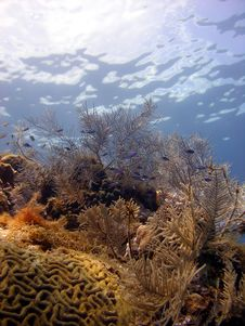 Free A Beautiful Coral Reef Scene Royalty Free Stock Photos - 16193858