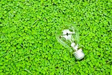 Free Green Bulb Stock Photos - 16193993