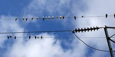 Birds (pigeons) On The Electrical Wires Stock Photo