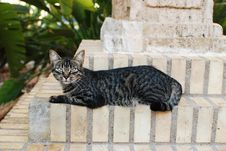 Free Cat Alley Stare Royalty Free Stock Photography - 16196697
