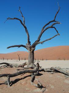 Free Sossusvlei Desert Stock Photography - 16198222