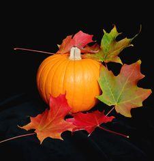 Pumpkin And Leaves On Black