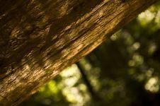 Free The Giant Sequoia Tree Royalty Free Stock Image - 16199086