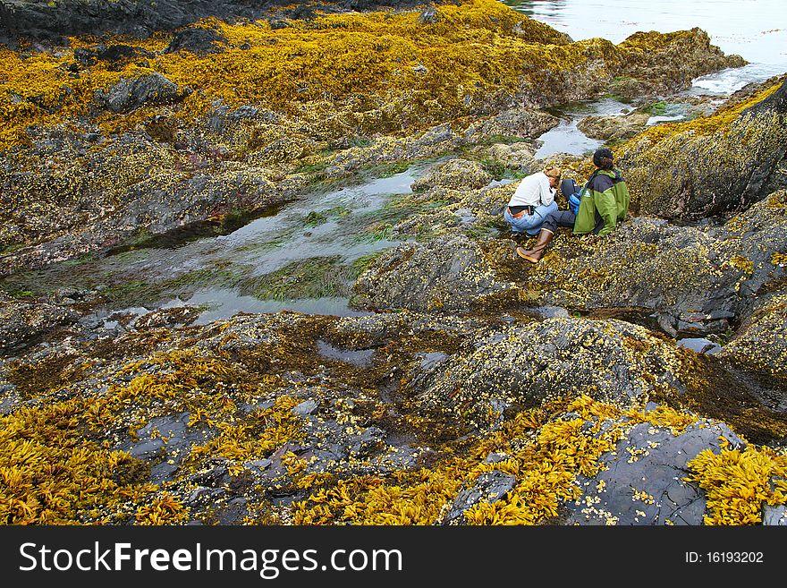 Intertidal zones exposed