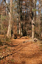 Free Forest Trail Royalty Free Stock Image - 1620386