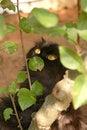Free Cat And Tree Stock Photos - 1622393