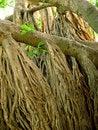 Free Jungle Tree Stock Photography - 1629492