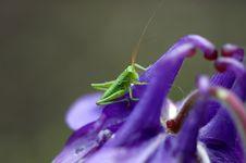 Free Grasshopper Stock Images - 1620704