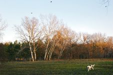 Autumn Meadow With Dog And Trees Stock Image