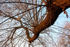 Free Curved Branch On Sky Background Royalty Free Stock Image - 1620936