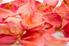 Free Red Rose Petals Royalty Free Stock Image - 1621916
