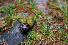 Free Common Garden Snail Stock Photo - 1623650