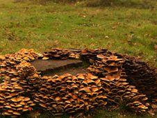 Free Toadstools Around A Treetrunk Royalty Free Stock Photo - 1624085