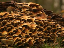 Free Toadstools Around A Treetrunk Royalty Free Stock Image - 1624086