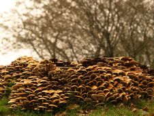 Free Toadstools Around A Treetrunk Stock Image - 1624091