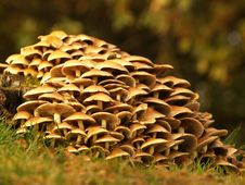 Free Toadstools Around A Treetrunk Stock Images - 1624094