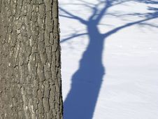 Free Shadows Of A Tree On Snow Royalty Free Stock Photography - 1624667