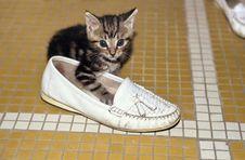 Free Kitten Royalty Free Stock Image - 1624886
