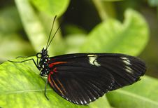 Free Butterfly Stock Photos - 1625483
