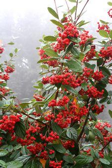 Free Autumn Fruits 4 Royalty Free Stock Photo - 1625955
