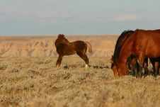 Wild Horses Foal Looking Back Stock Photography