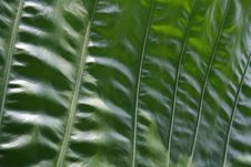Free Big Green Leaf Royalty Free Stock Images - 1628899