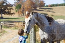 Free Little Boy Feeding Horse Stock Photography - 1629392