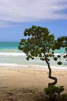 Free Beach Tree Stock Photo - 1629520