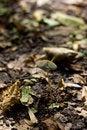 Free Mushroom Stock Photos - 16202203