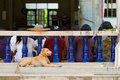 Free Dog At Buddhist Temple In Thailand Stock Photo - 16202240