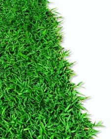 Free Green Grass Royalty Free Stock Photos - 16200068