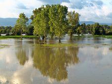 Free Reflecting Trees Stock Photo - 16200290