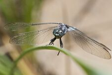 Free Keeled Skimmer Dragonfly Royalty Free Stock Photography - 16201567
