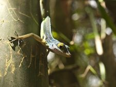Green Lizard Hunting On Tree Stock Photography