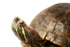 Free Turtle Stock Photography - 16201922