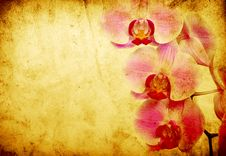 Free Orchid Stock Image - 16203371
