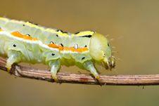 Free Green Caterpillar Royalty Free Stock Photos - 16205248