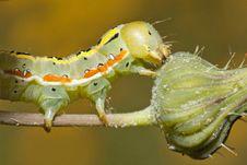 Free Green Caterpillar Royalty Free Stock Photography - 16205287