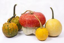 Free Five Different Pumpkins Royalty Free Stock Image - 16205876
