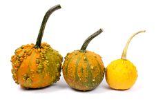 Three Different Pumpkins Stock Photo