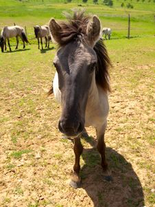 Free Horse On Field Stock Image - 16206081