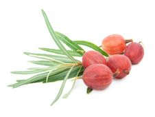 Free Red Gooseberries Royalty Free Stock Photography - 16206087