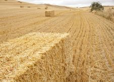 Free Hay Bales Royalty Free Stock Photos - 16206208